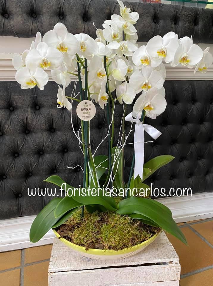 centro de 3 orquideas